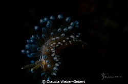 free falling ....impression I of a free swimmimg nudi,